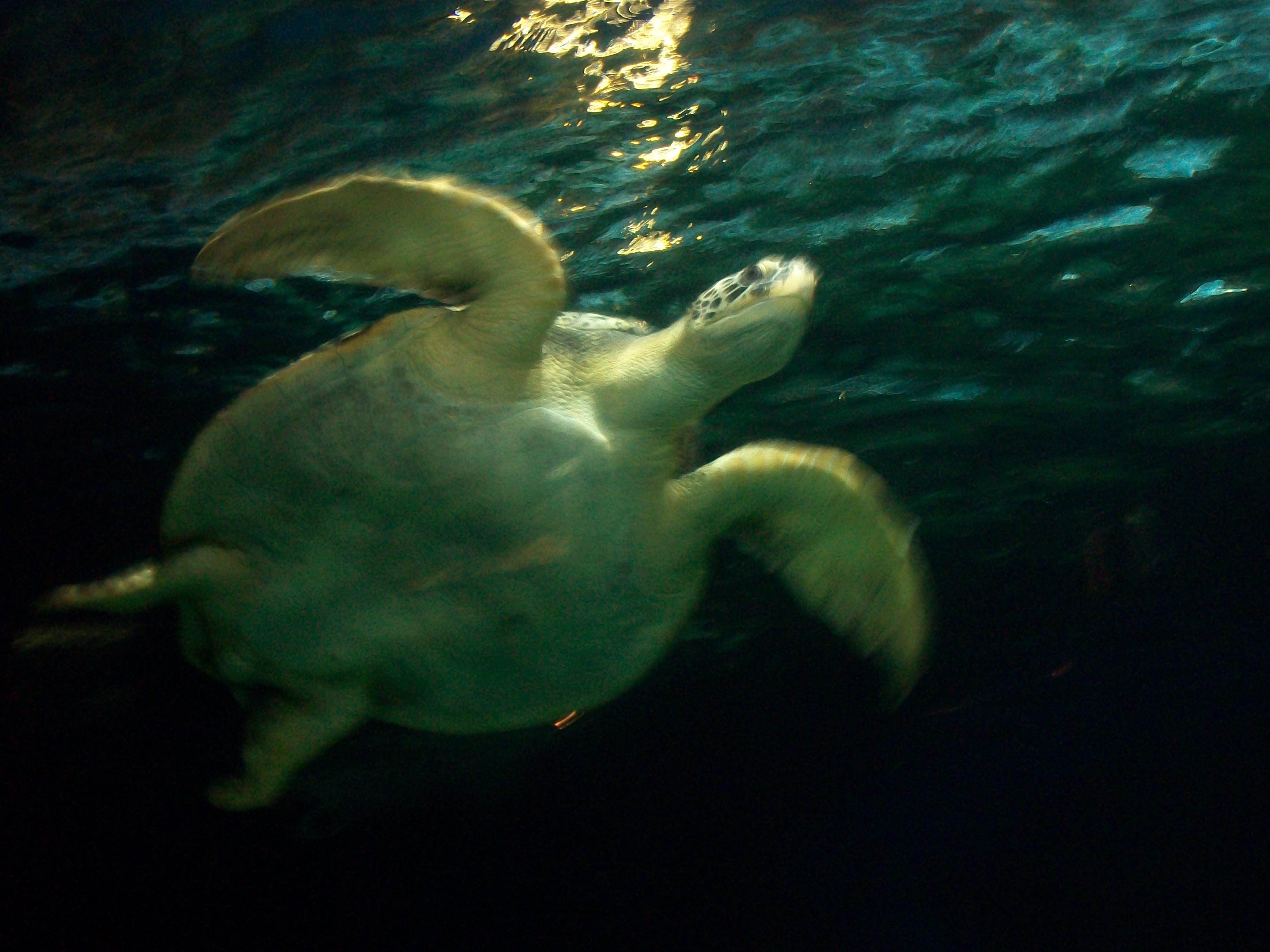 Vancouver Aquarium New To Vancouver