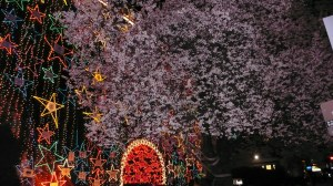 Cherry Blossoms and Christmas Lights